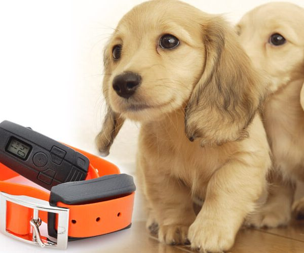 dog training collar with shock vibration